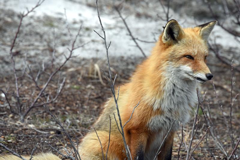 fox 030516_0746e