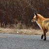 fox 030516_0721e