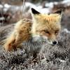 fox 030516_0673e