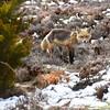 fox 030516_0647e