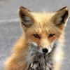 fox 030516_0603 2e