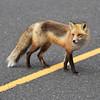 fox 030516_0705e