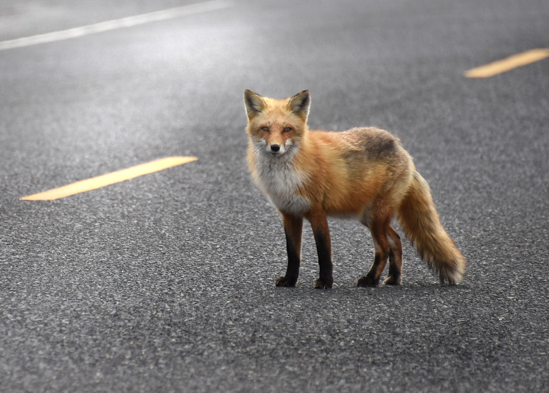 fox 030516_0707e