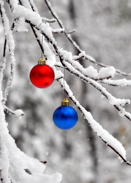 snow balls 102911_0037 2