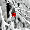 snow ball red 102911_0030 2