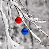 snow balls 102911_0037