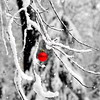 snow ball red 102911_0026 2