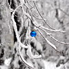 snow ball blue 102911_0025 3