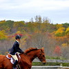 horse 102211_0216