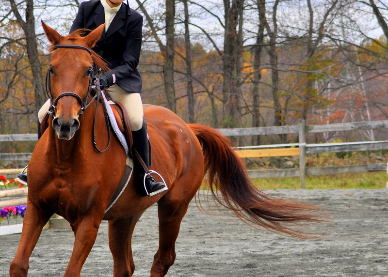 horse 102211_0070