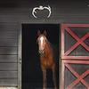 horse 050515_1106 4