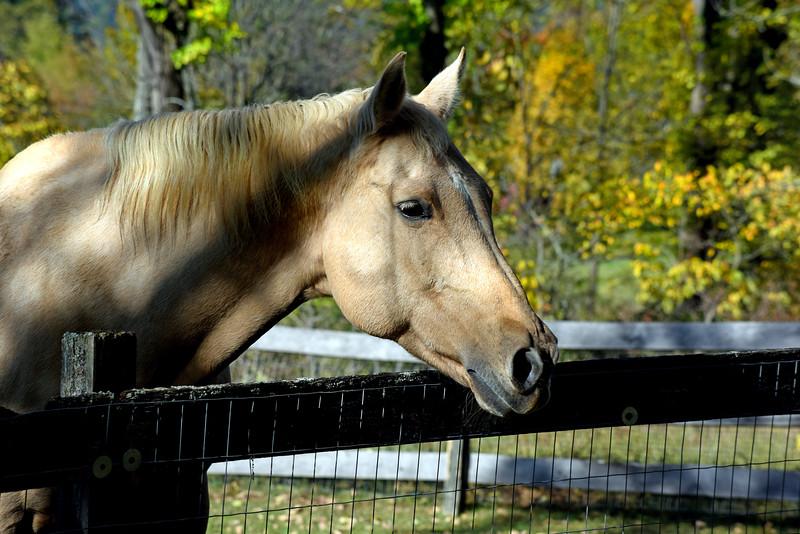horse 101015 _8699 2