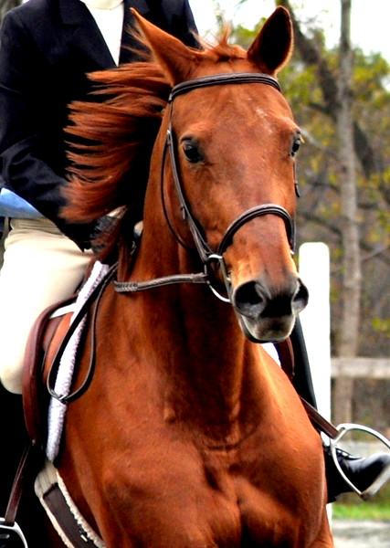 horse_0025 2