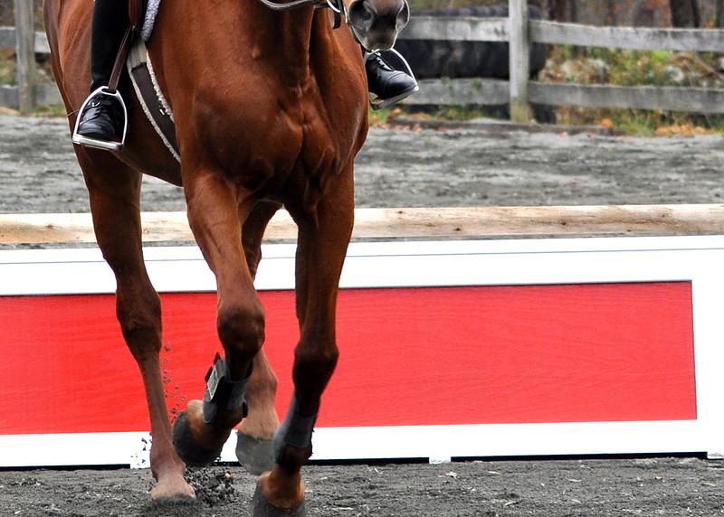 horse 102211_0137