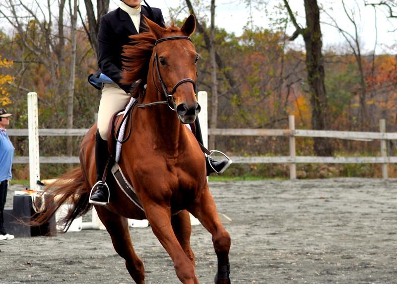 horse 102211_0025