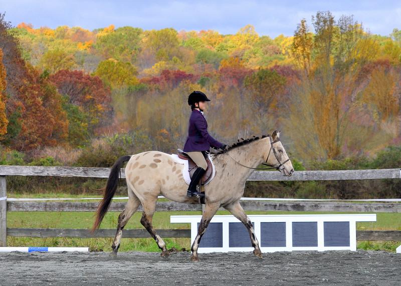 horse foliage 102211 0602 3