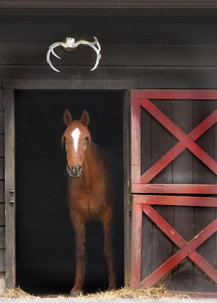horse 050515_1104 2
