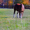horse 111014_0702