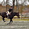 galloping horse 102211_0289