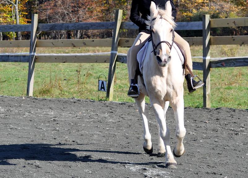 galloping horse 102211_0339