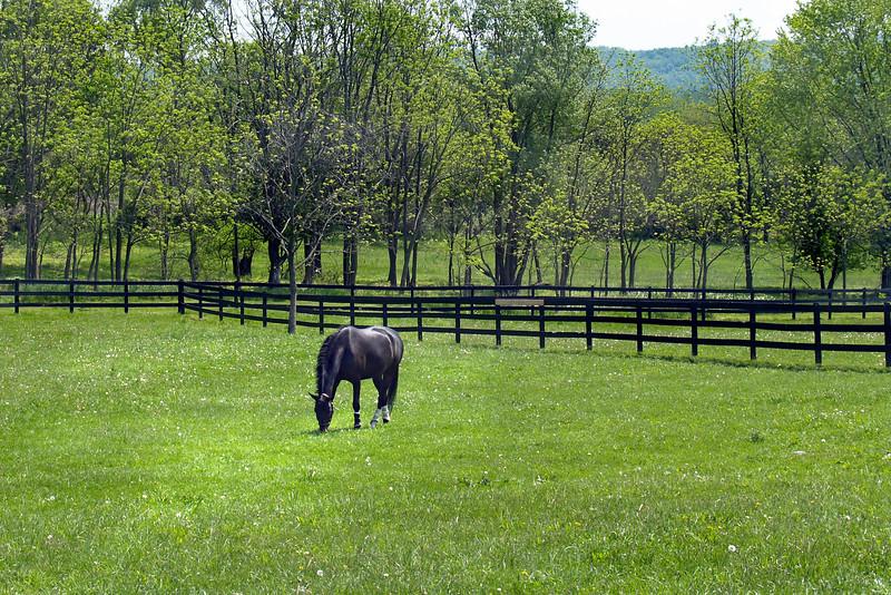 Horse field 573
