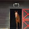 horse 050515_1106 9