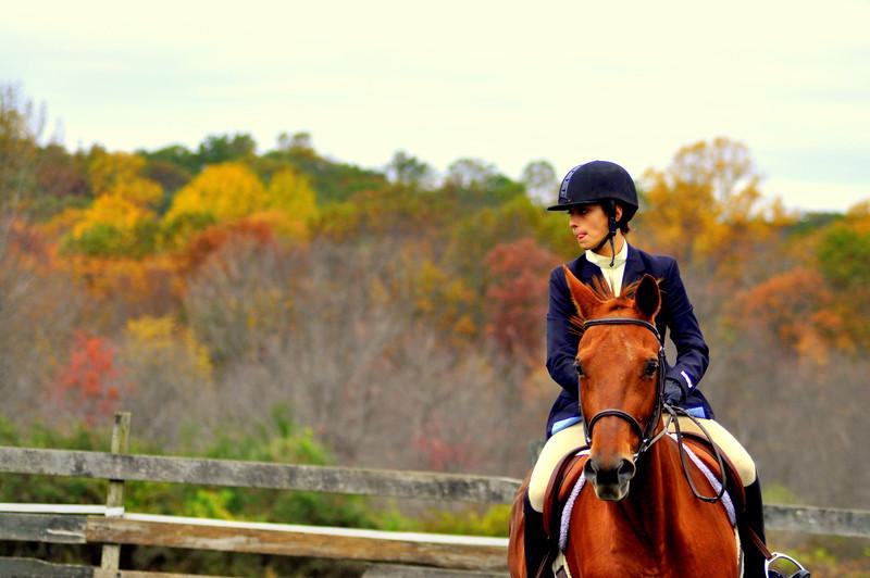 horse 102211_0204