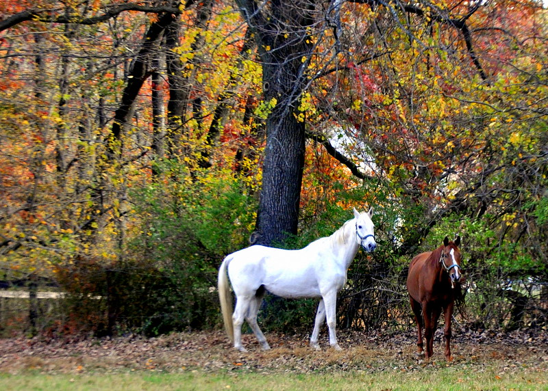 horses 102713_0042 2