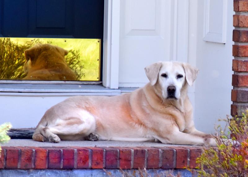 house dog 042515_0967 3