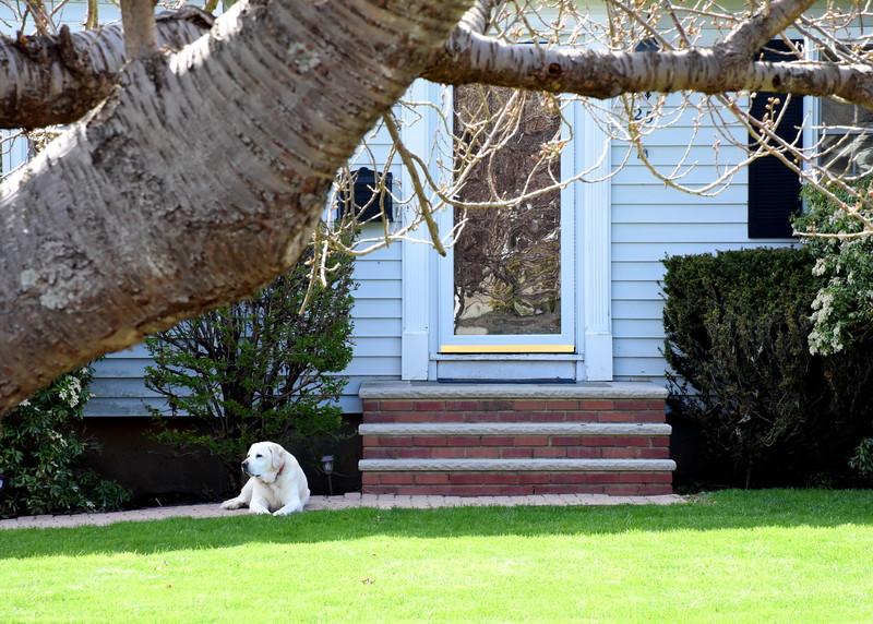 house dog 042515_0892