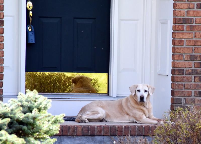 house dog 042515_0967