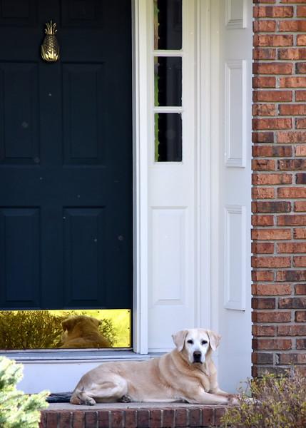 house dog 042515_0969