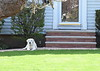 house dog 042515_0893