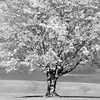 tree infrd 101017_0017  3 bw