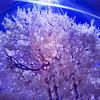Tree SC INF 0021