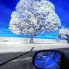 tree mirror Infrd 101017_0016 3