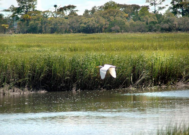 wetlands 081809_0727 2