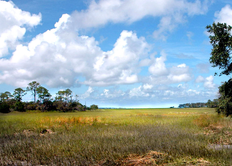 wetlands 081809_0707 2