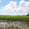 wetlands 081809_0706 2