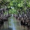 swamp 040212_0396
