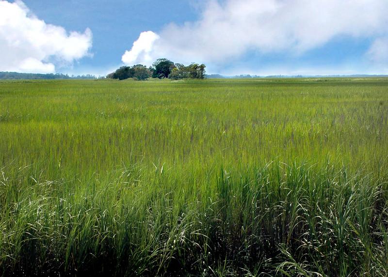 wetlands 081809_0723 2