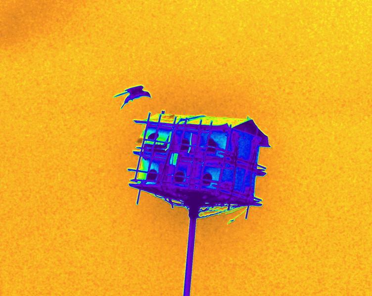 House Bird 0530