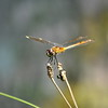 dragonfly 81413_0297