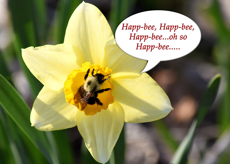 Happ-bee daffy 042915_1095 3