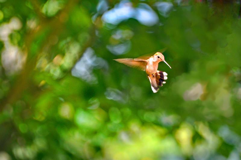 Humbird 072815_0001 2