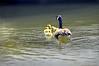 goose 50714_0368 4