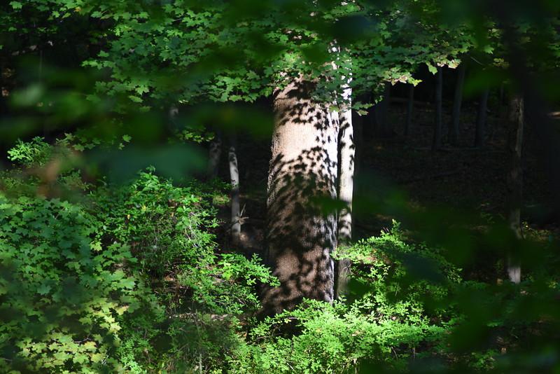 tree 091915_7508