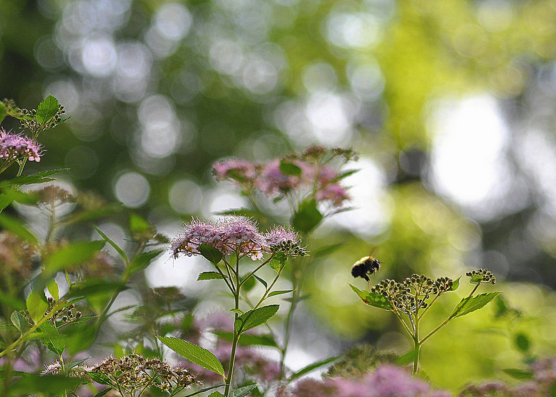 bee 61513_0070 2