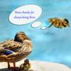 duckling 41614_0238 4