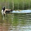 goose 50714_0149 3